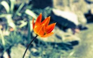 IMG_0288 (Im Botanischen Garten)