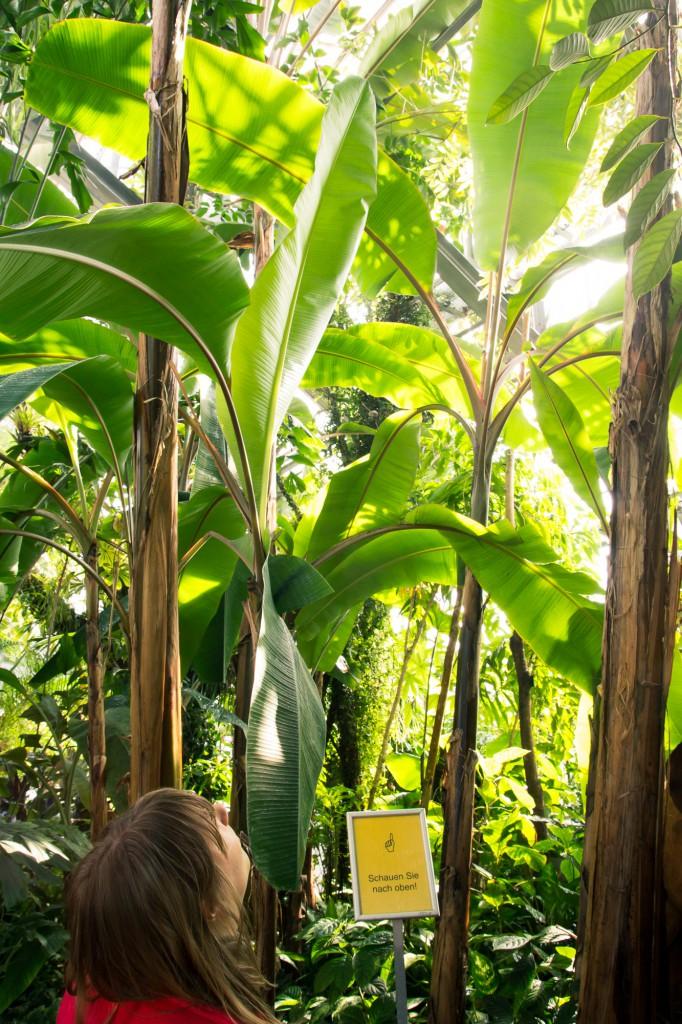 IMG_0317 (Im Botanischen Garten)