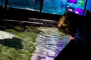 Aquarium (Kieler Woche 2014)